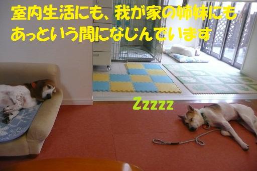 f0121712_9295196.jpg