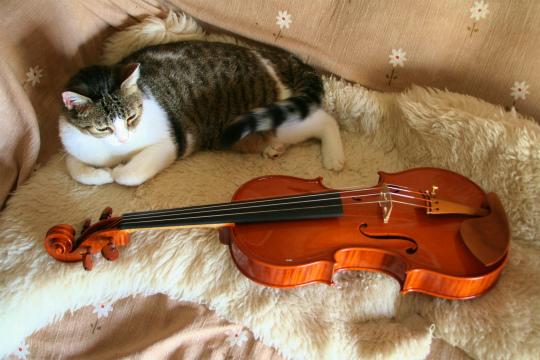 弦楽器フェアのお知らせ、広告編、と製作記_d0047461_7134849.jpg