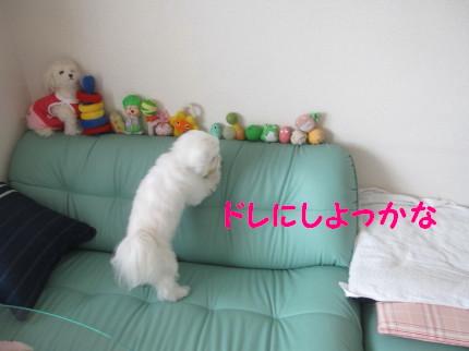 b0193480_16281062.jpg