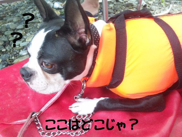 ★BBQと川遊び at 秩父 親鼻河原★_d0187891_20595096.jpg