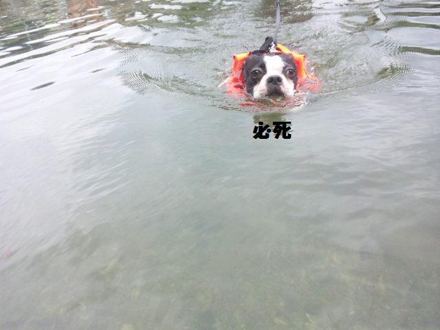 ★BBQと川遊び at 秩父 親鼻河原★_d0187891_2111135.jpg