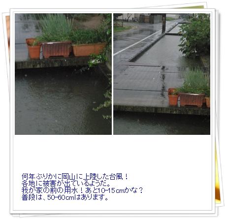 b0229904_20402274.jpg