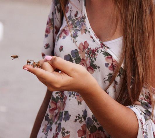 ニューヨークの青空市場で見かけたミツバチのダンス_b0007805_4183299.jpg