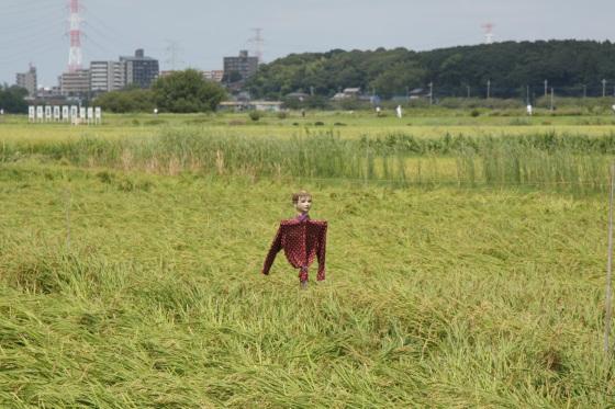 妄想な収穫時 2011 by KBの遠藤_f0225627_19493372.jpg