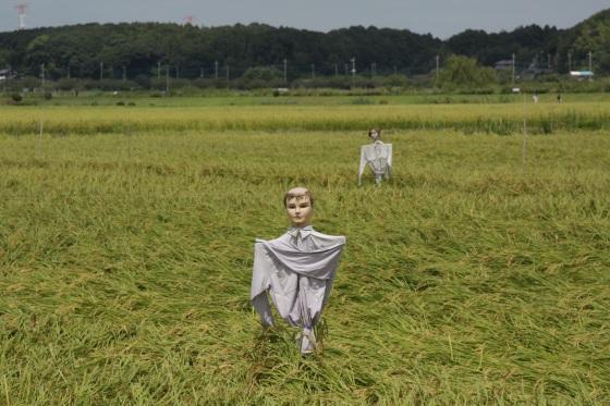 妄想な収穫時 2011 by KBの遠藤_f0225627_19562179.jpg