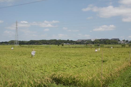 妄想な収穫時 2011 by KBの遠藤_f0225627_1957328.jpg