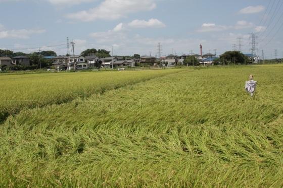 妄想な収穫時 2011 by KBの遠藤_f0225627_2002084.jpg
