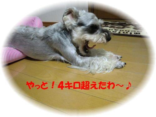 b0206444_10533572.jpg