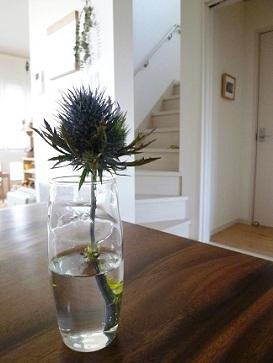 球根用の花瓶を買う_e0214646_14473112.jpg