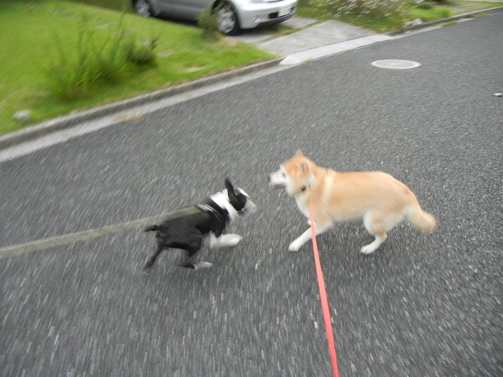 2011年9月3日(土)台風12号!_f0060461_19305112.jpg