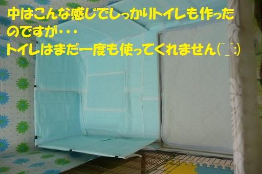 f0121712_1626568.jpg