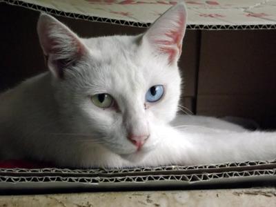 恋人は白い猫_b0105719_15273093.jpg