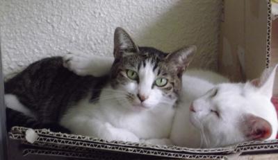 恋人は白い猫_b0105719_15373461.jpg