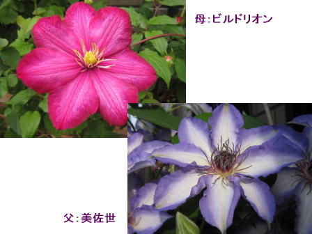 c0025140_19453610.jpg