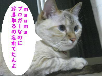 b0151748_8583353.jpg