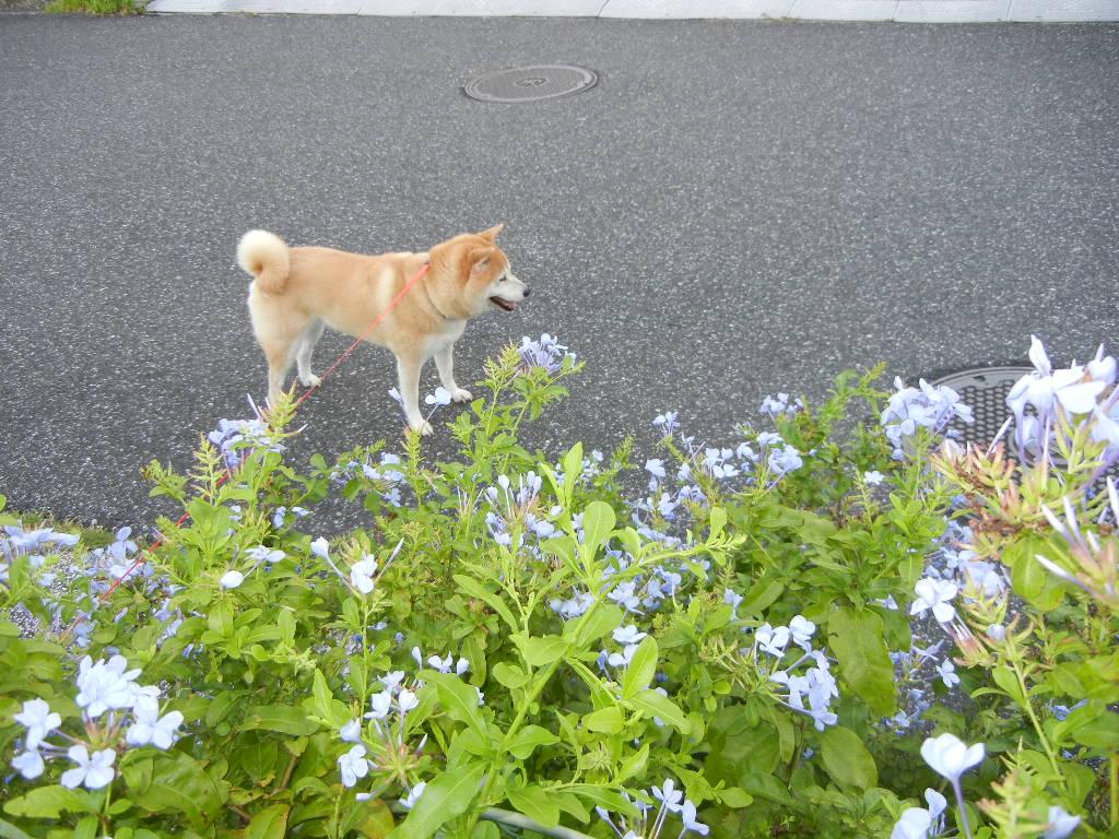 2011年9月4日(日)台風がやっと!_f0060461_940386.jpg