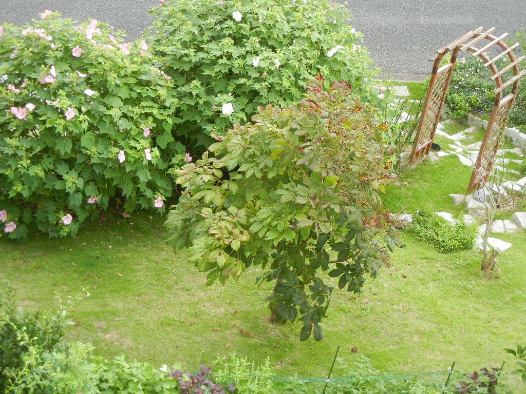 2011年9月4日(日)台風がやっと!_f0060461_9471014.jpg