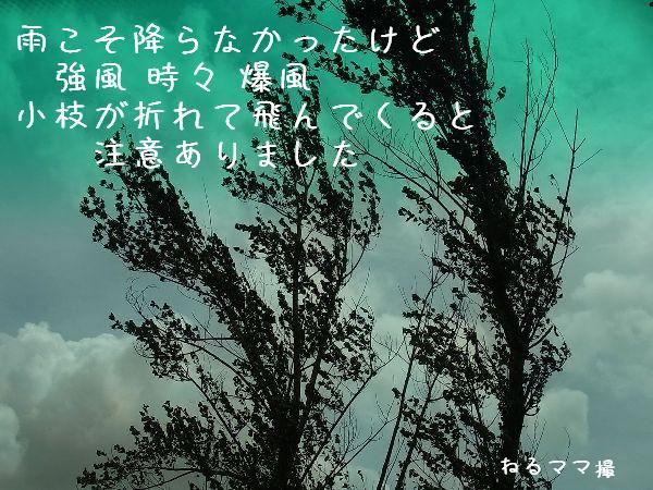 b0101991_188277.jpg
