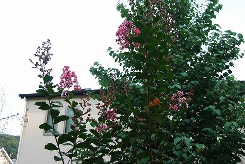 今更な、8月の庭…_c0124100_1831440.jpg