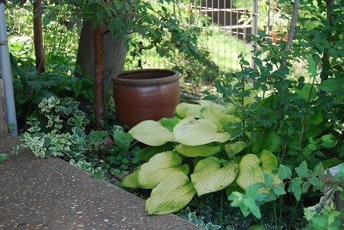 今更な、8月の庭…_c0124100_18314633.jpg