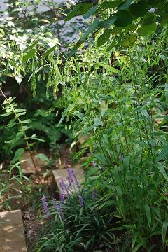 今更な、8月の庭…_c0124100_18333169.jpg