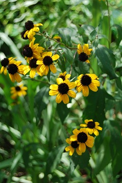 今更な、8月の庭…_c0124100_1833530.jpg