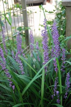 今更な、8月の庭…_c0124100_18374459.jpg