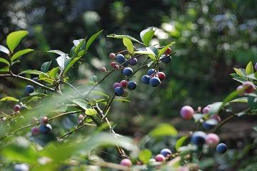今更な、8月の庭…_c0124100_18381396.jpg
