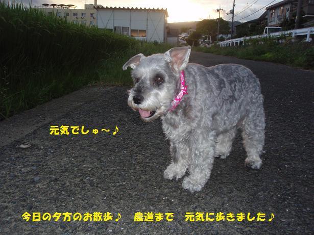 c0098501_2111398.jpg
