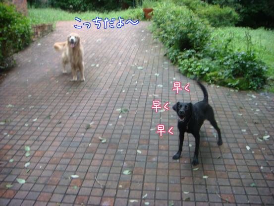 びしょ濡れのボール遊び_f0064906_1749796.jpg