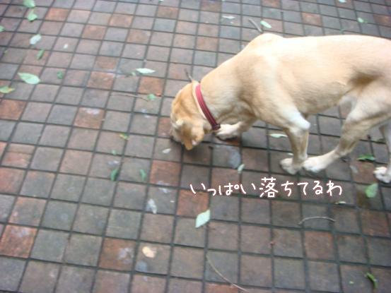 びしょ濡れのボール遊び_f0064906_1750251.jpg
