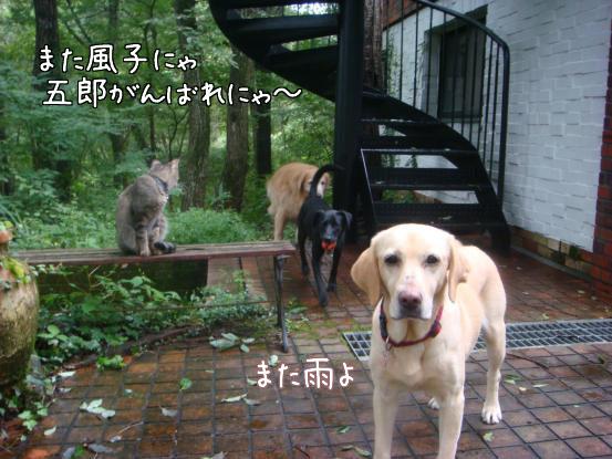 びしょ濡れのボール遊び_f0064906_17573716.jpg