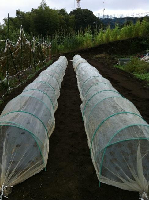 昨晩&朝11時前の集中豪雨でも ネットで種は守られます_c0222448_1241755.jpg
