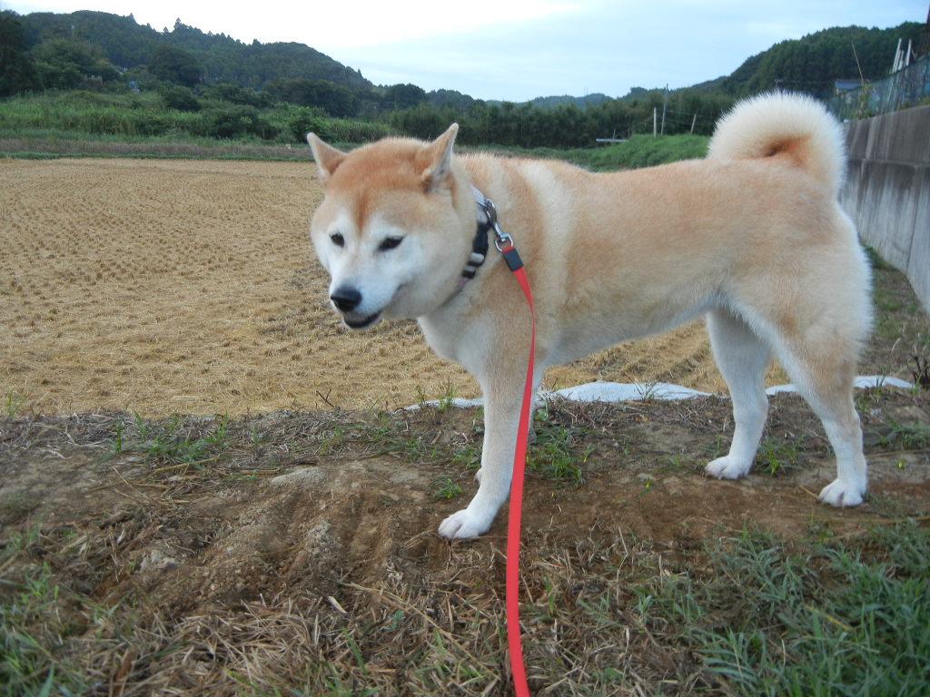 2011年9月5日(月)台風一過!_f0060461_7522982.jpg