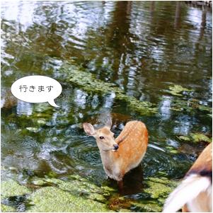 鹿物語_c0137872_1153821.jpg