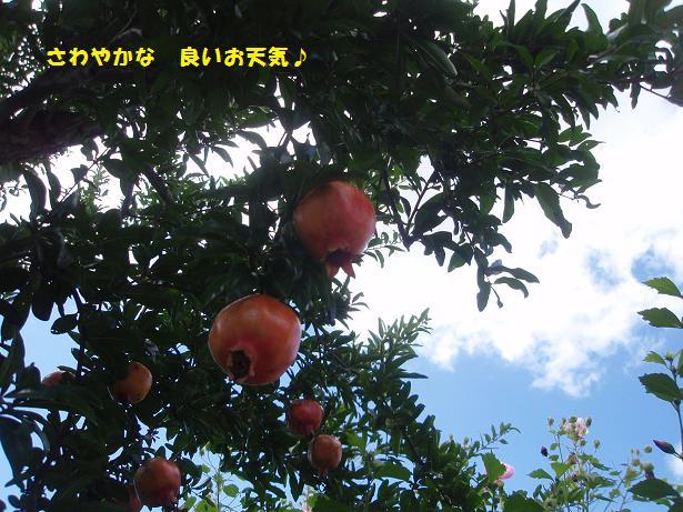 c0098501_2135960.jpg