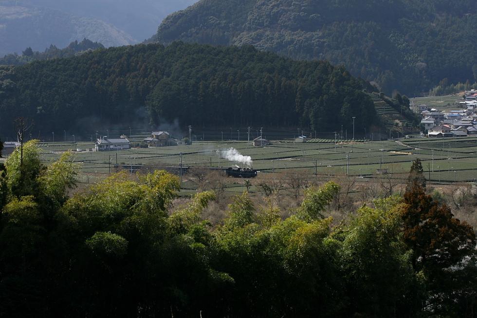 穏やかな冬日 - 2011年・大井川 -_b0190710_226896.jpg