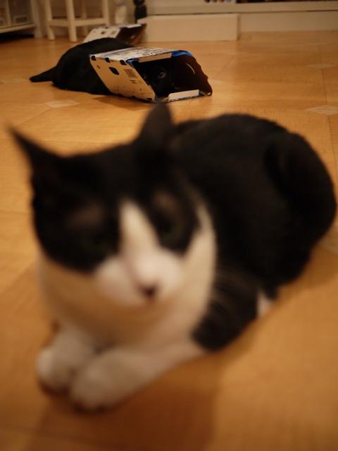 き・に・な・る猫 空のぇるろった編。_a0143140_23332128.jpg