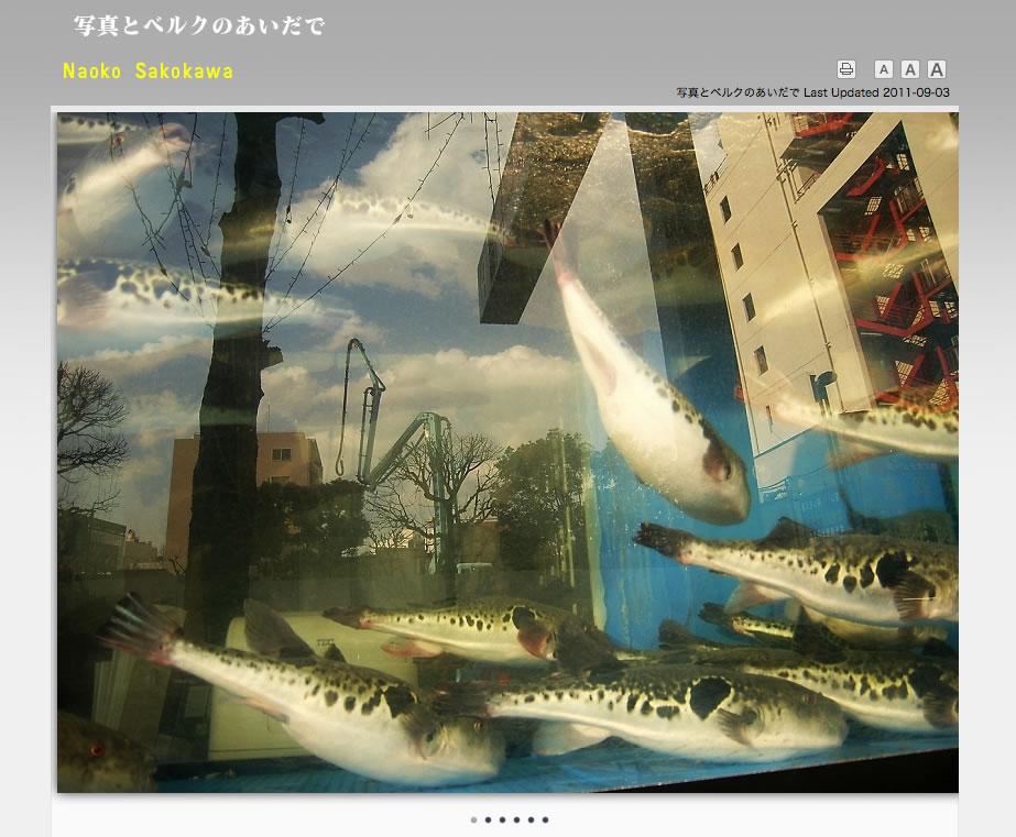 【迫川尚子公式サイトオープン】 写真とベルクのあいだで_c0069047_1443734.jpg