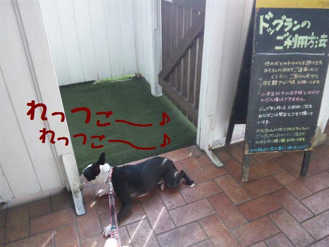 ★はなこはんに逢いに湘南へ ドッグガーデンリゾート編★_d0187891_13563619.jpg