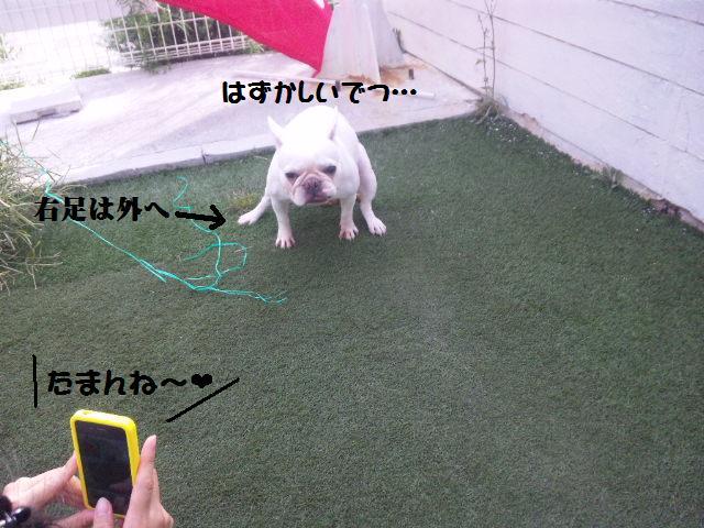 ★はなこはんに逢いに湘南へ ドッグガーデンリゾート編★_d0187891_13564448.jpg