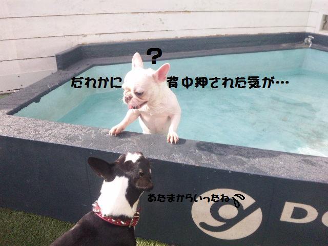 ★はなこはんに逢いに湘南へ ドッグガーデンリゾート編★_d0187891_13565270.jpg