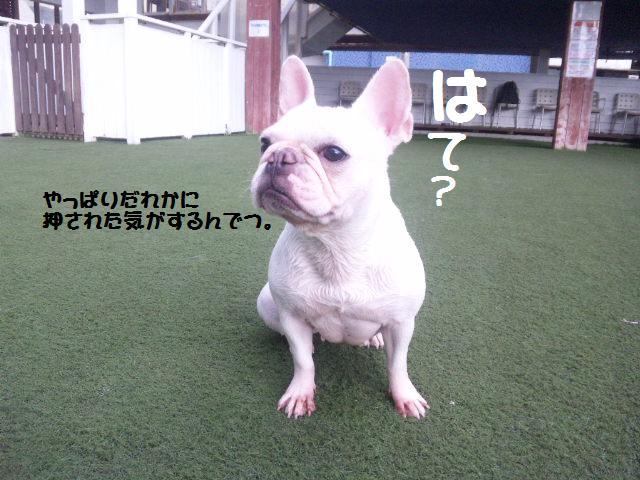 ★はなこはんに逢いに湘南へ ドッグガーデンリゾート編★_d0187891_1357312.jpg