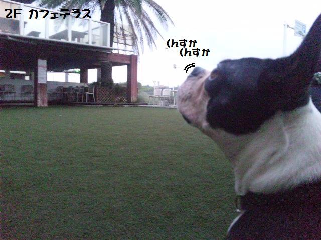 ★はなこはんに逢いに湘南へ ドッグガーデンリゾート編★_d0187891_13574514.jpg