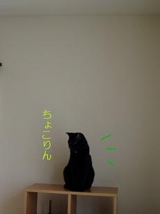 b0200310_649198.jpg