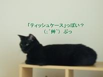 b0200310_70172.jpg