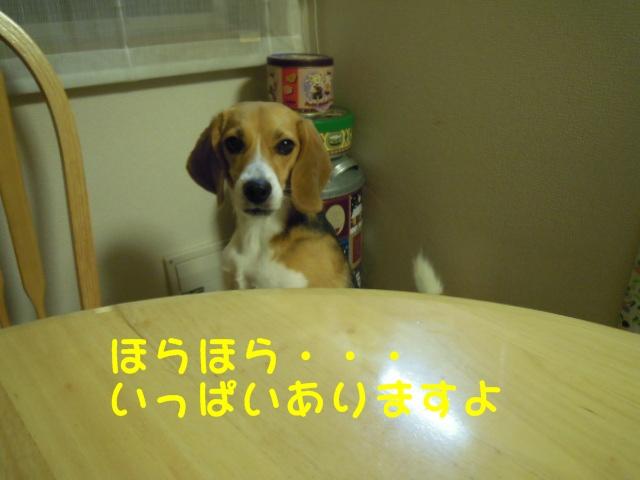 c0166622_8513056.jpg