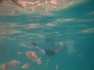 青い海と赤い海_d0046025_1233187.jpg