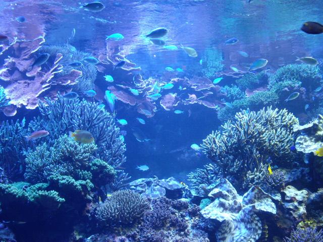 2011年 夏旅行 ~夢が一つ叶いました@鳥羽水族館~_d0104926_6212043.jpg