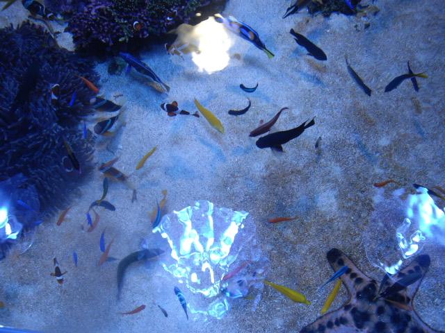2011年 夏旅行 ~夢が一つ叶いました@鳥羽水族館~_d0104926_6215549.jpg